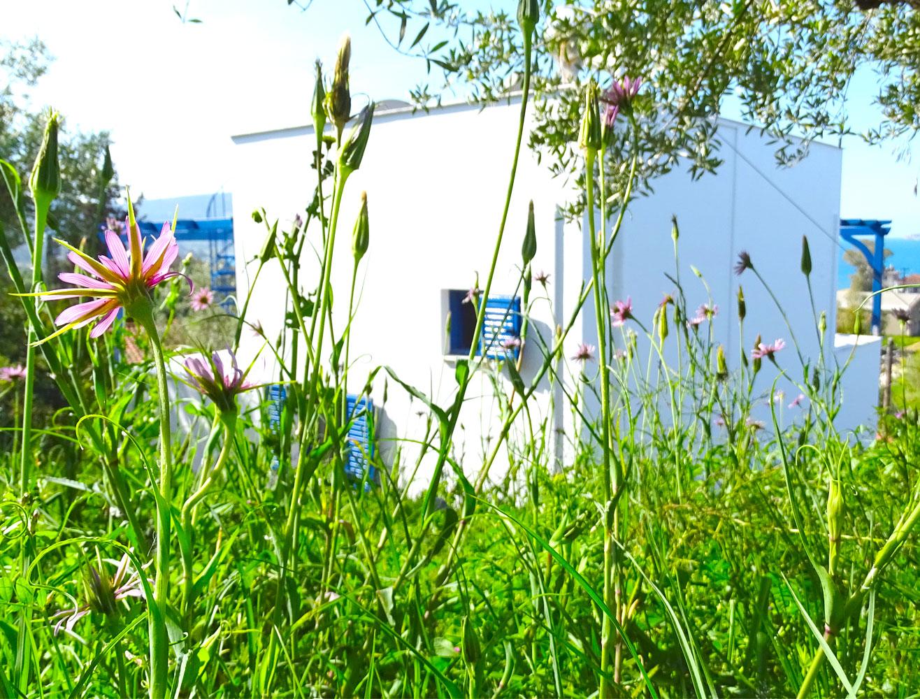 Villa Andrea vu du jardin